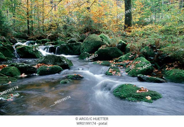 Forest, brook, in, autumn, National, park, Bavarian, Forest, Bavaria, Germany