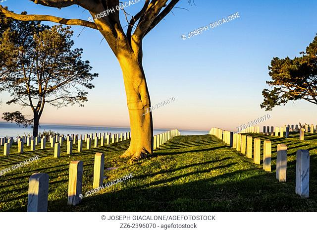 The rising Sun illuminating trees with the ocean in the background. Fort Rosecrans National Cemetery, San Diego, California, United States