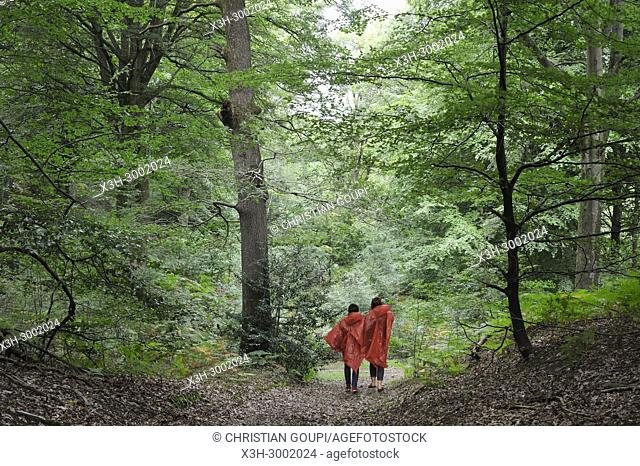 walkers in beech tree grove in the Forest of Rambouillet, Haute Vallee de Chevreuse Regional Natural Park, Department of Yvelines, Ile de France Region, France
