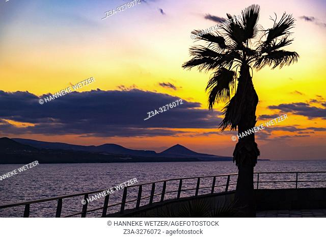 Sunset with palmtree at the coastline of Las Palmas de Gran Canaria, Canary Islands