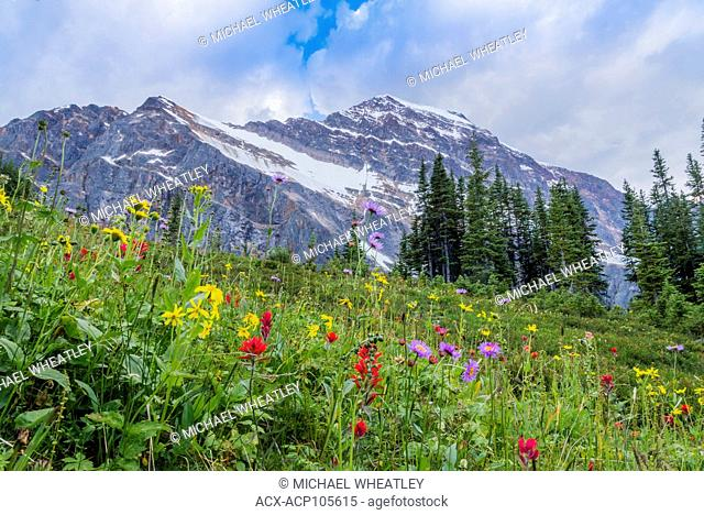 Wildflower meadow at Mount Edith Cavell , Jasper National Park, Alberta, Canada