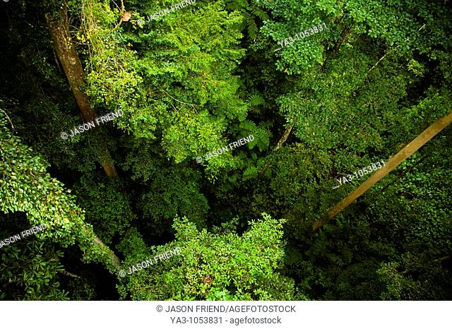 Sabah Malaysia, Borneo, Kinabalu National Park  View from the canopy walkway at the Poring Hot Springs, looking down to the jungle floor