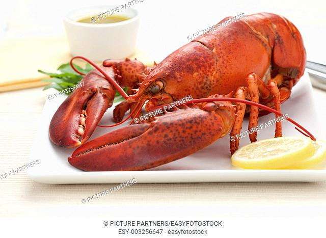 Fresh cooked lobster on a plate with lemon butter sauce