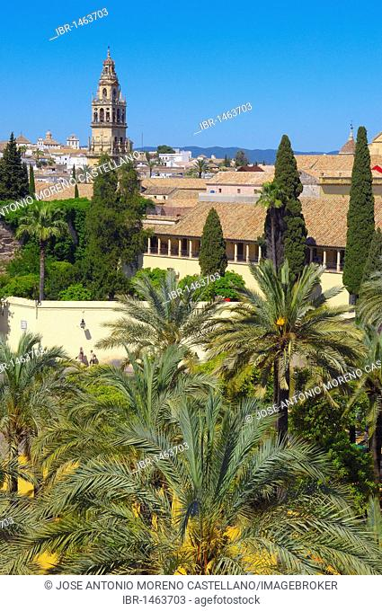 Alcázar de los Reyes Cristianos, Alcazar of Catholic Kings, and minaret tower of the Great Mosque, Cordoba, Andalusia, Spain, Europe