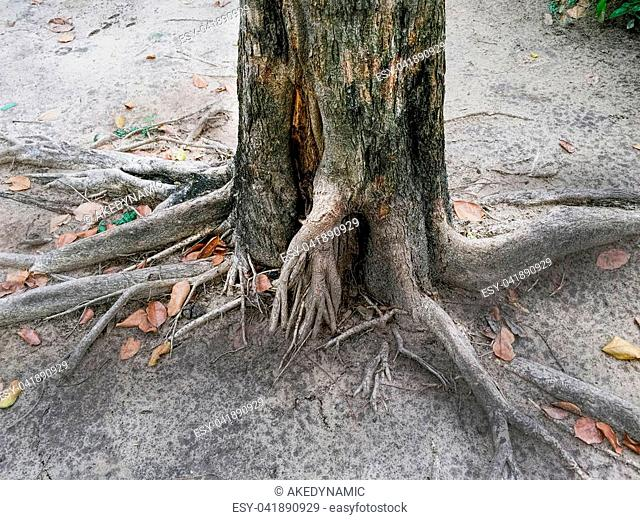 Tree Trunk and Root Texture