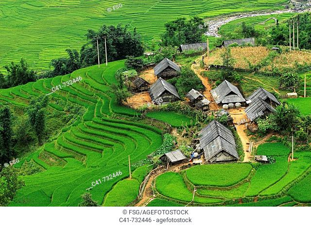 Rice terraces, Lao Cai, Vietnam