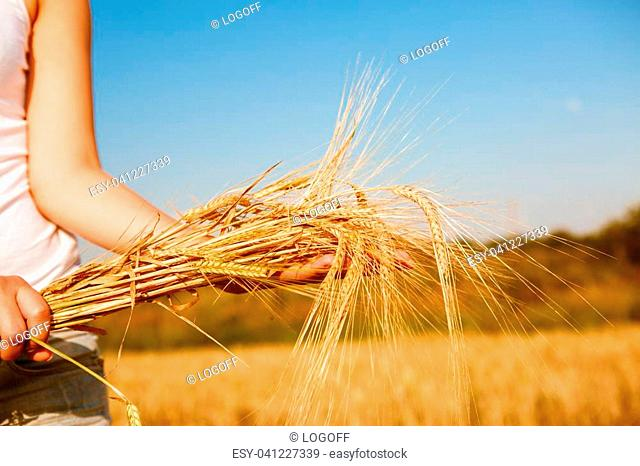 Image of girl in white T-shirt with spikelets rye in hands in field