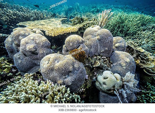 Hard and soft corals and reef fish underwater on Sebayur Island, Komodo National Park, Indonesia