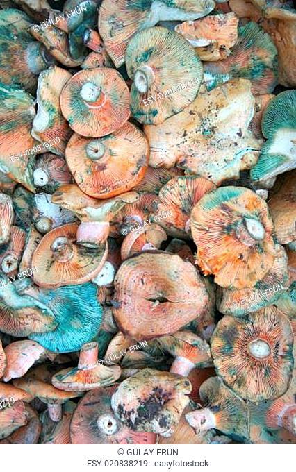 mushrooms at bazaar