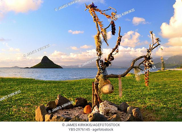In accordance with Hawaiian Tradition, lies are hung on branches so that they may be returned to the earth, rather than being thrown in the trash