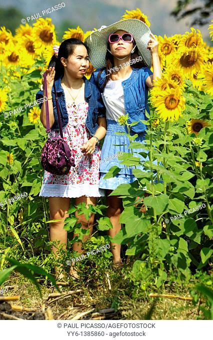 girls posing, sunflower fields of lopburi , central thailand
