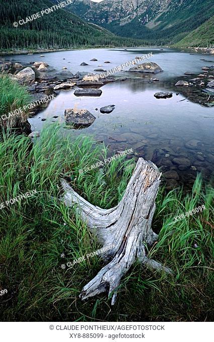 Stump-and-Lake