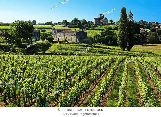 France. Gironde. Montagne Saint Emilion, surrounded by vine fields, in the Bordeaux wine area