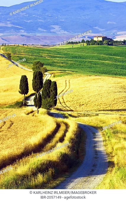 Cypress trees (Cupressus) and fields near Terrapille, Pienza, Tuscany, Italy, Europe, PublicGround