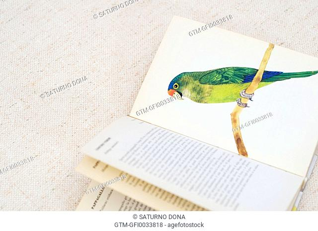 Parrot illustration on book page