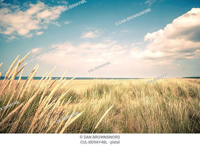 Dune marram grasses and view of sea, Norfolk, UK