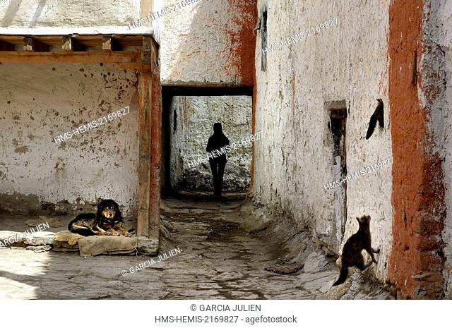 Nepal, Gandaki zone, Upper Mustang (near the border with Tibet), dog, cats and silhouette of a woman in a street of the walled city of Lo Manthang