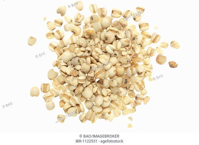 Seeds of the medicinal plant Adlay, Adlay millet, Job's tears, Yi Yi Ren, (Coix lachryma-jobi)