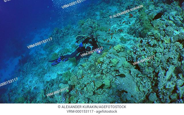 Underwater photographer photographs on a coral reef