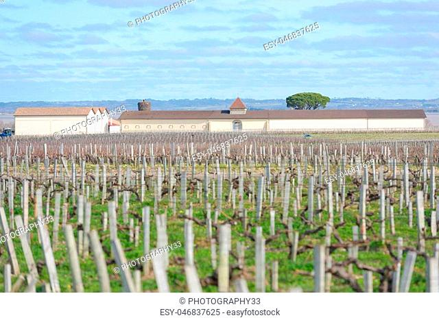 view of a chateau and perfect vineyard