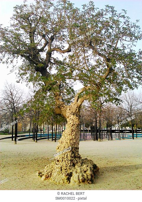 Tree in Estació del Nord park, Barcelona, Catalonia