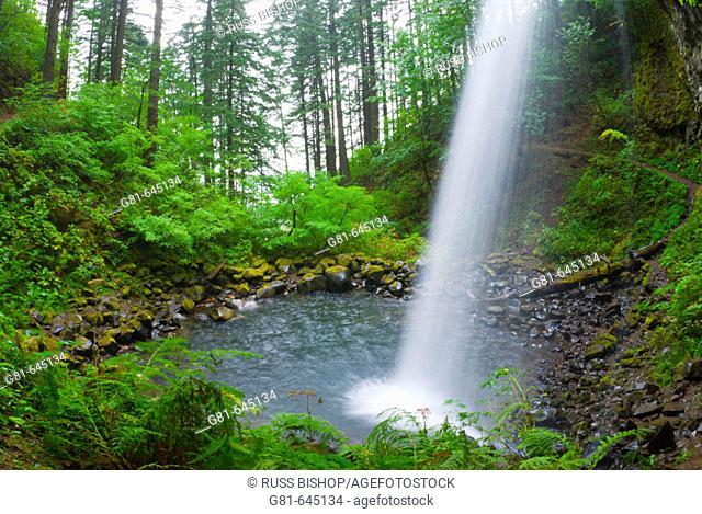 Ponytail Falls, Columbia River Gorge National Scenic Area, Oregon, USA