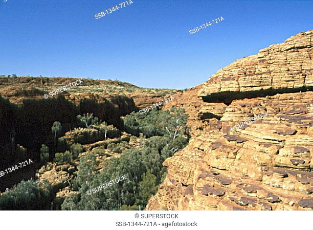 High angle view of trees on a landscape, Kings Canyon, Watarrka National Park, Northern Territory, Australia