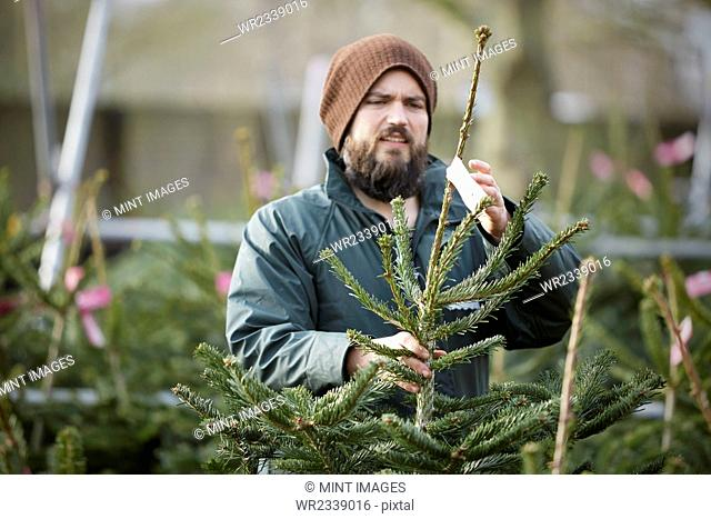 A man in winter hat and waterproof jacket handling a tall Christmas tree