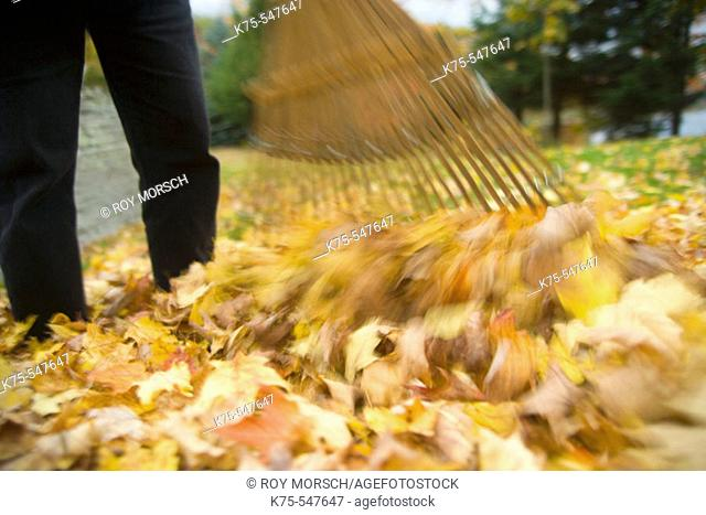Autumn, rake, leaves