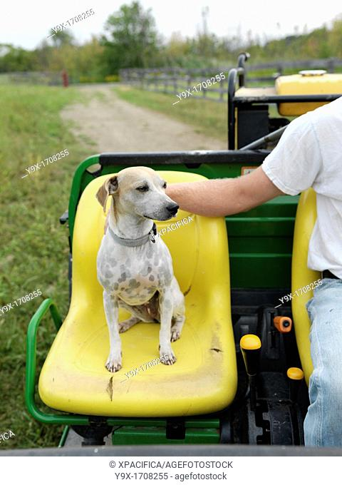 A farmer's dog claims his seat on a farm tractor on a organic farm in Upstate New York