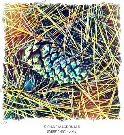 A pine cone and pine needles