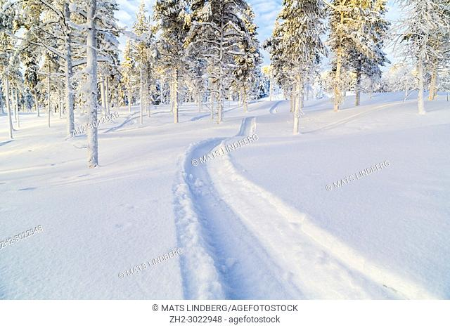 Snowmobile track in the snow with snowy spruce trees and blue skye with clouds and warm light, Gällivare, Swedish Lapland, Sweden
