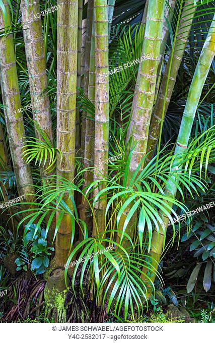 Bamboo in Sunken Gardens in St Petersburg Florida