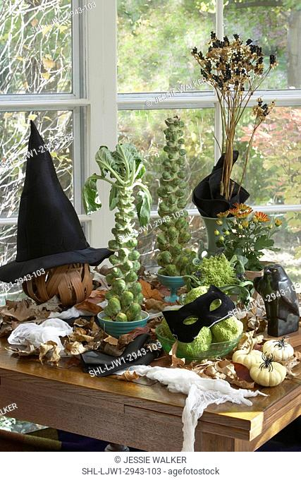 HALLOWEEN SET UP: Brussel sprout trees, lily pods, black cat mask on green hedge apples, white pumpkins, witch hat, spiders, fall dried leaves