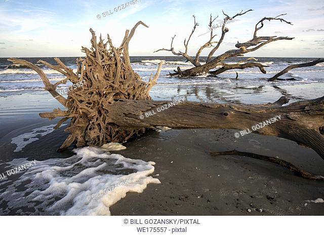 Driftwood Beach Landscape - Jekyll Island, Georgia, USA