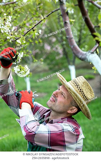 Russia. Belgorod region. Spring work in the orchard