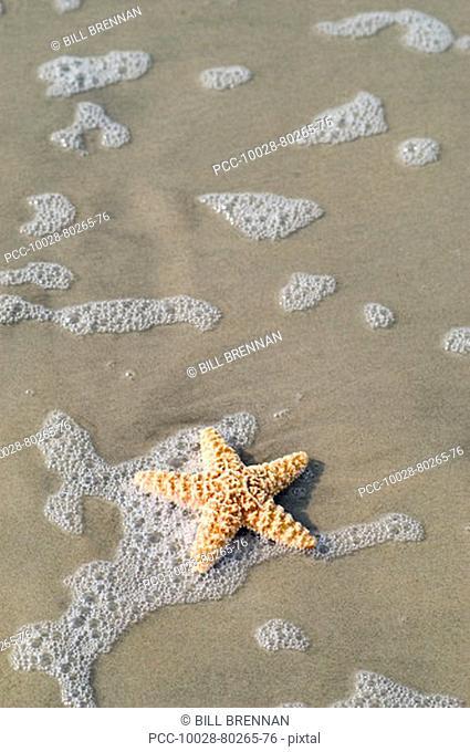 Starfish on sandy beach with ocean wash and seafoam
