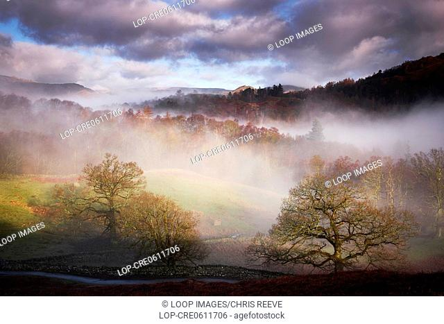 Misty trees in the early morning above Rydal Water in the Lake District