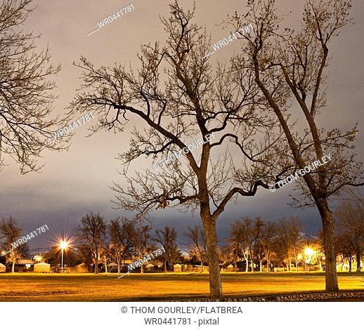 Park Field at Night