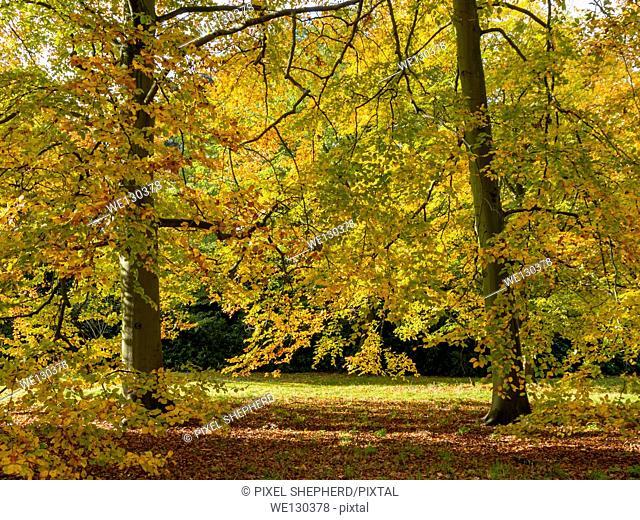 Europe, UK, England, London, Kew Gardens in autumn