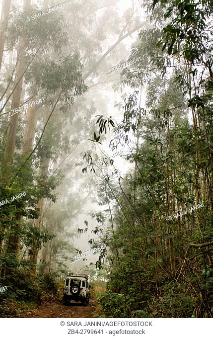 Ribeiro Frio Forest (with woods of especially endemic species of laurel, such as the laurel -Laurus novocanariensis), Madeira, Portugal