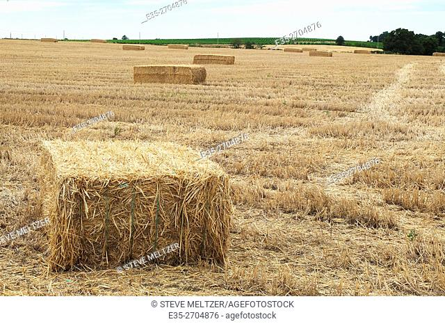 Bales of hay are gathered in the summer for cattle feed later in the year, France