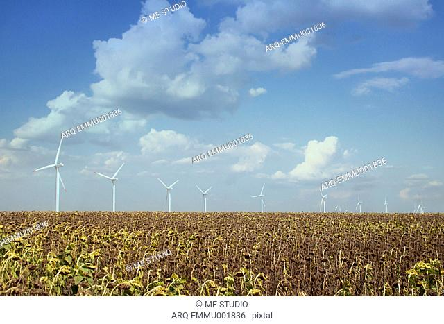 Scenic View Of Wind Turbines In Sunflower Field