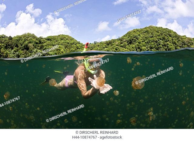 Schwimmen mit harmlosen Quallen, Mastigias papua etpisonii, Quallensee, Mikronesien, Palau, Swimming with harmless Jellyfishes, Mastigias papua etpisonii