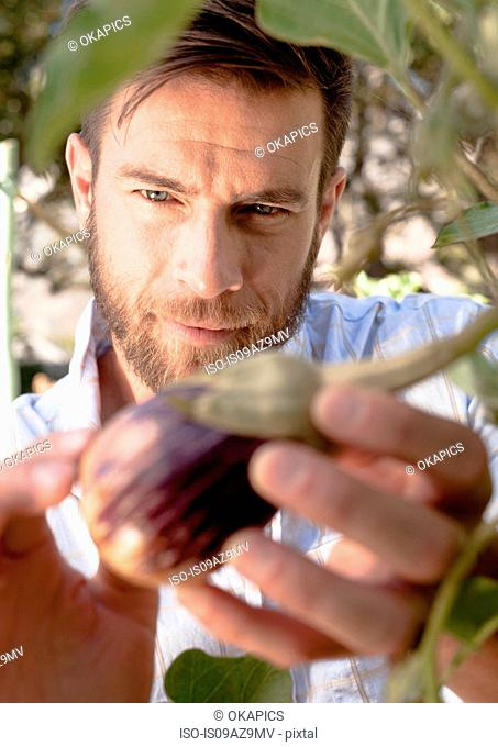 Mature man inspecting vegetables growing in garden, close-up