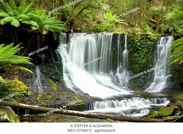 Horseshoe Falls - beautiful horseshoe-shaped waterfall cascades down a moss-covered cliff. It is located in lush temperate rainforest with lots of ground ferns...