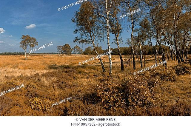 Netherlands, Holland, Europe, Deelen, Gelderland, landscape, field, meadow, trees, autumn, National park, de Hoge Veluwe, nature