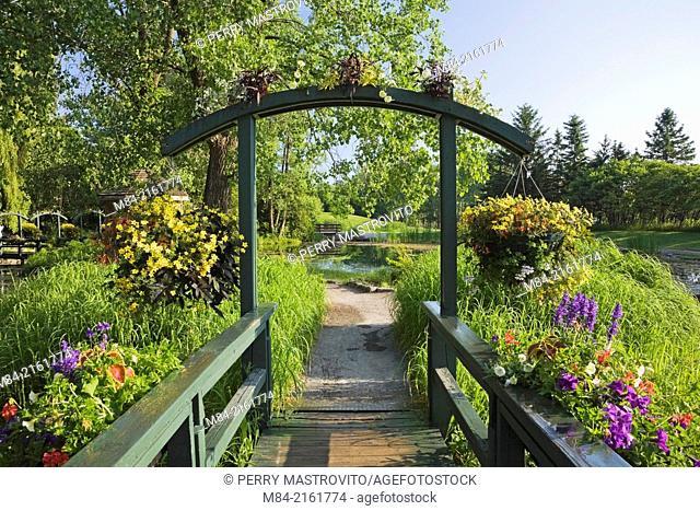 Wooden footbridge and arbour decorated with hanging baskets of yellow annual flowers in late spring, Centre de la Nature public garden, Saint-Vincent-de-Paul