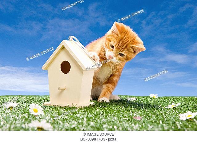 Kitten looking at birdhouse