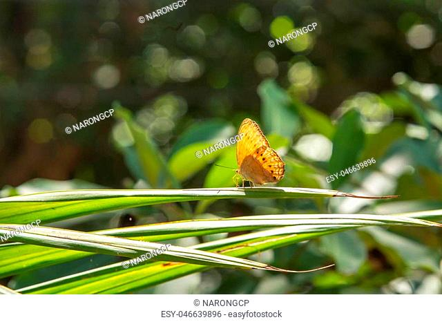 Beautiful butterfly in nature with bokeh Backgrounds. Pang Sida national park. Sa Kaeo Province, Thailand